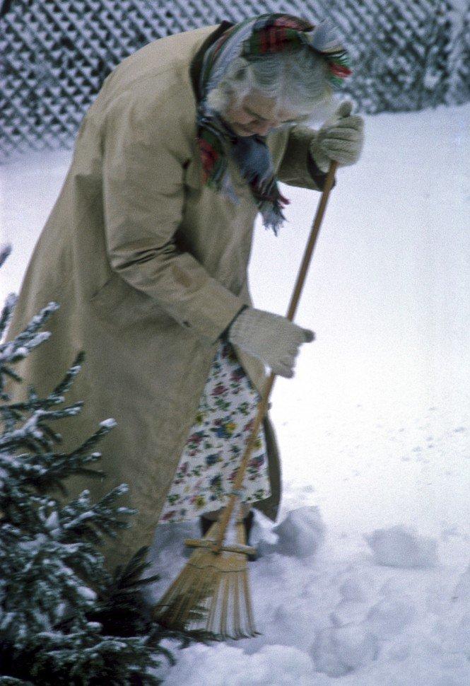 Free image of Elderly woman raking snow around a pine tree.