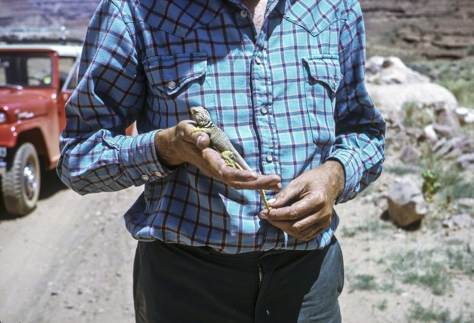 Free image of Close up of a man holding a lizard in his hands, circa 1969, Utah, USA