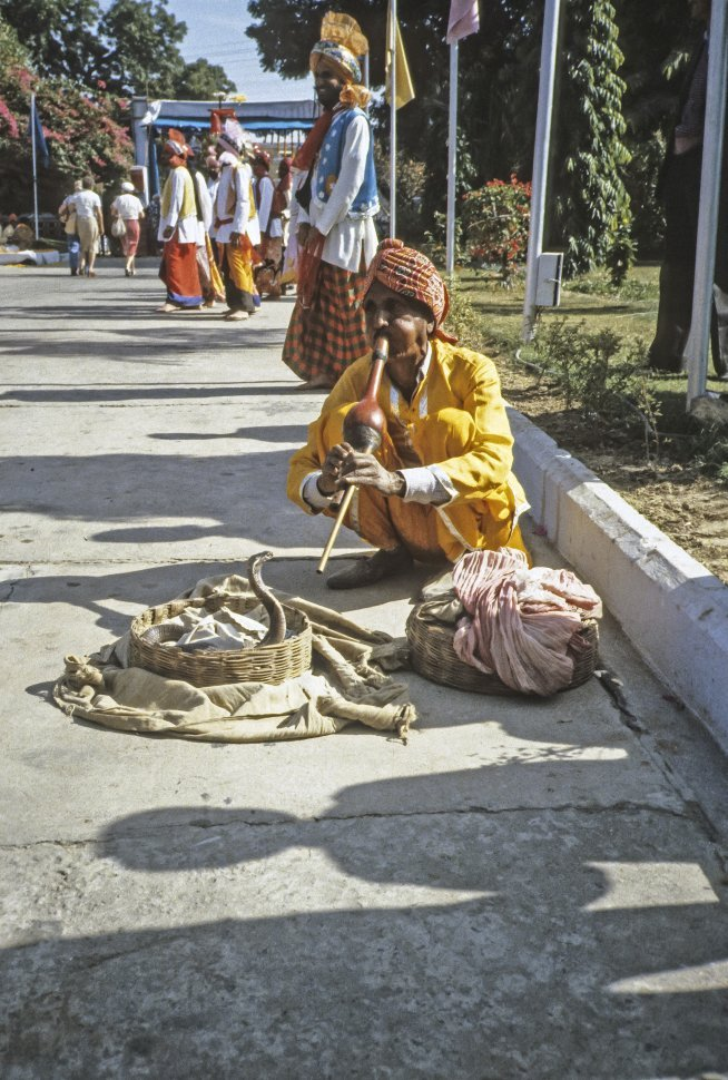 Free image of Snake charmer performing with his cobra snake, India
