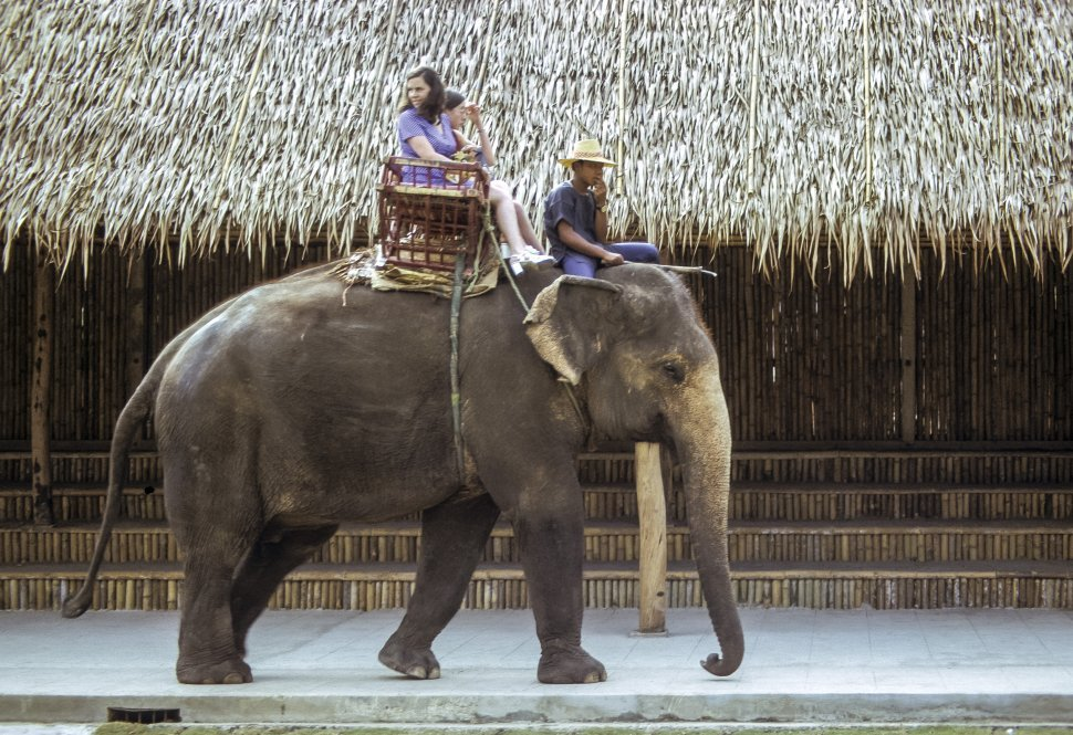 Free image of Two young women ride a guided elephant in front of a traditional thatched hut, Thailand