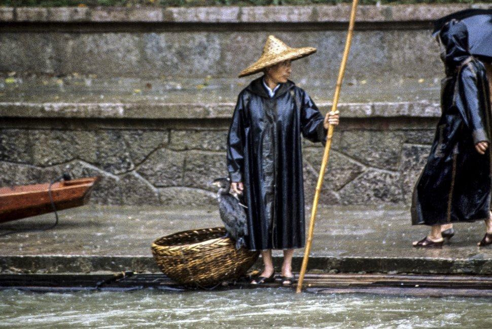 Free image of Man standing on the side of a canal with a pole, basket, and bird, Asia