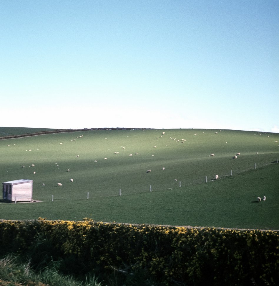 Free image of Large flock of sheep on a hillside in a field with a small cabin.