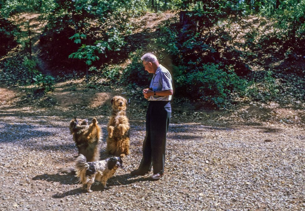 Free image of Man training three dogs in a gravel driveway, USA