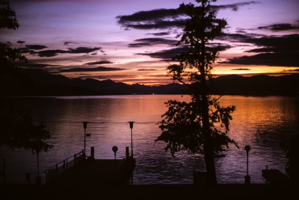 Free image of Wooden pier and tree silhouette at sunset.