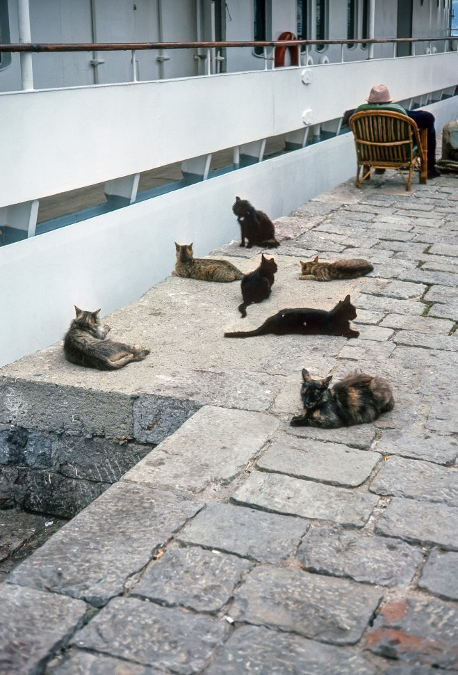 Free image of Stray cats lounging in the sun behind an elderly seated man.