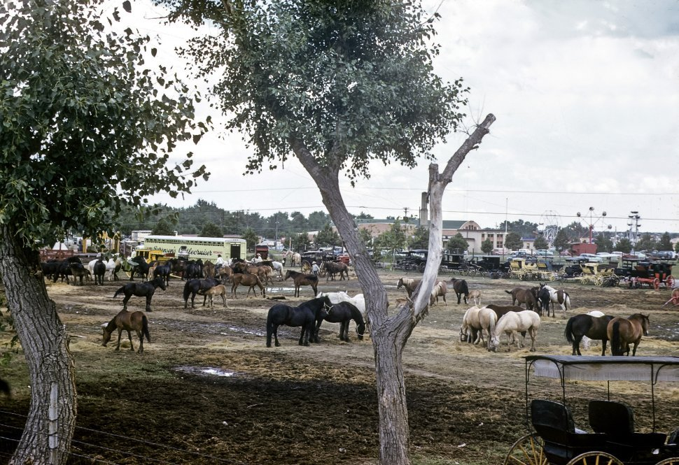 Free image of Horses grazing in a field at a state fair, USA