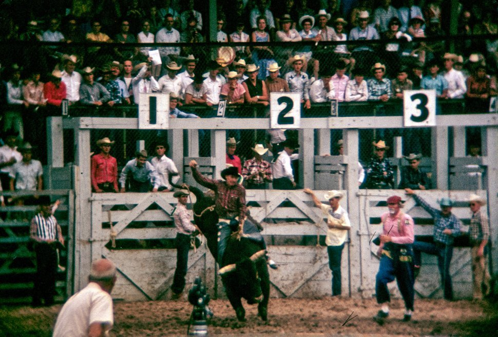 Free image of Crowd watching a cowboy performing on a bull at the rodeo, USA