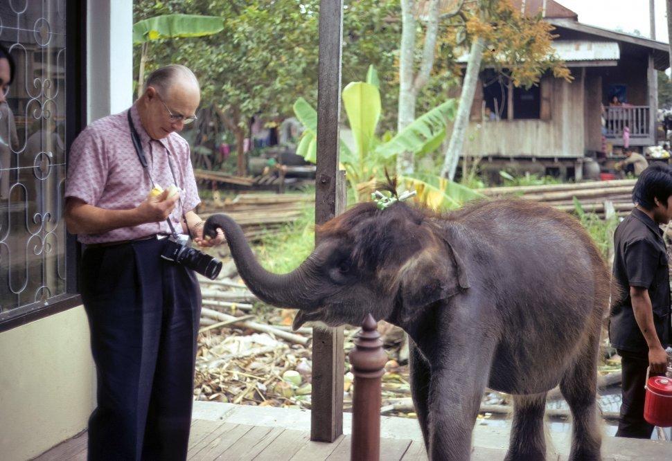 Free image of Man feeding fruit to a baby Elephant Elephas maximus, circa 1974, Hong Kong, China