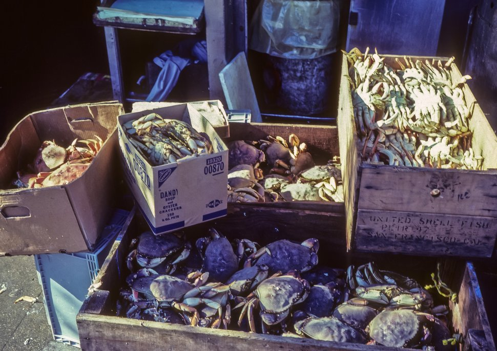 Free image of Boxes of freshly caught crabs sitting on the dock.