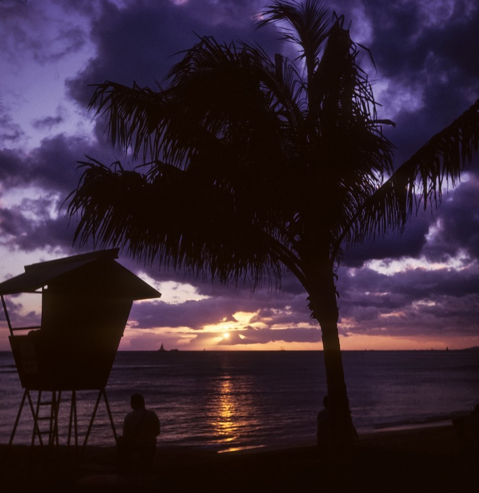 Free image of Person watching the sunset under a palm tree next to a lifeguard stand.