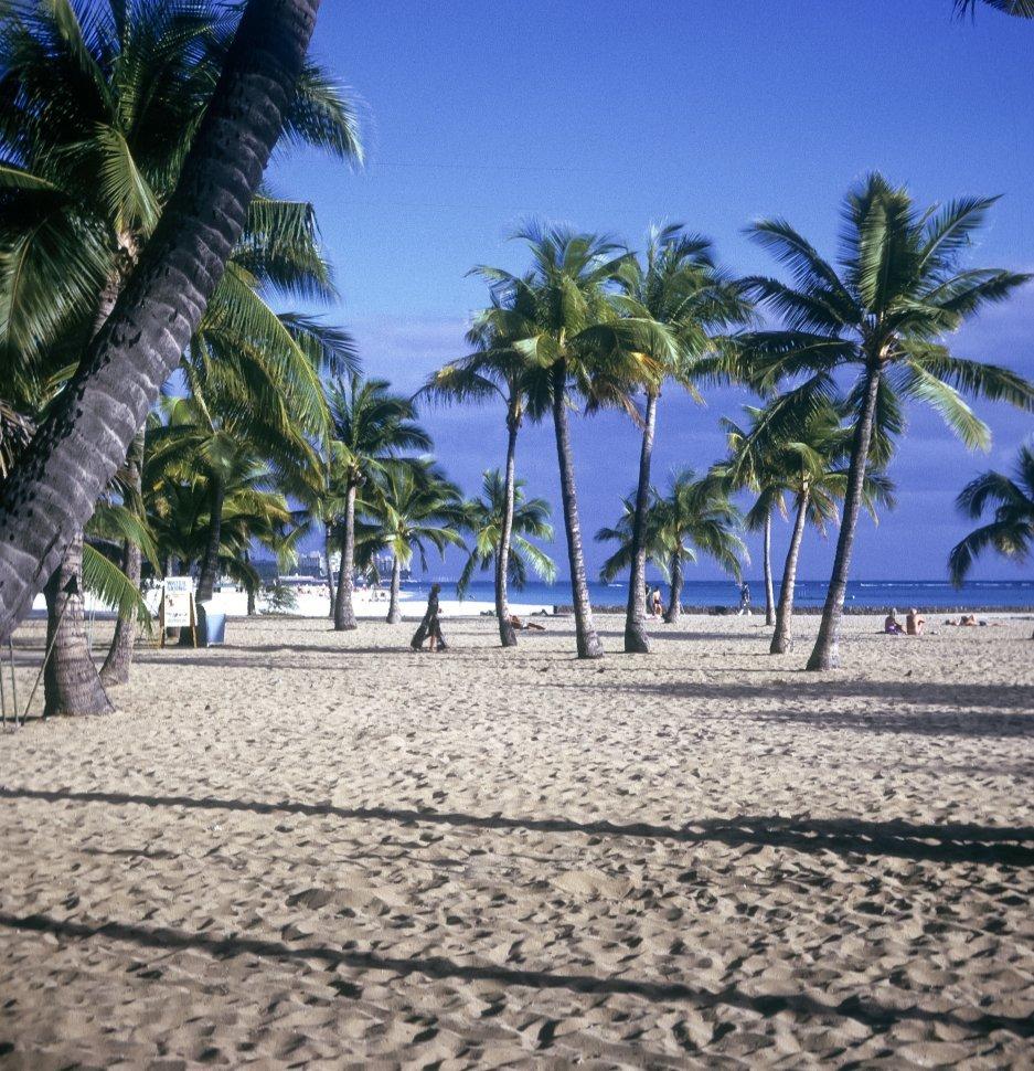 Free image of Woman walking beneath palm trees on the beach, Hawaii, USA