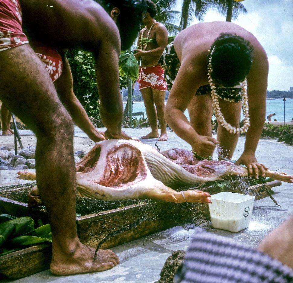 Free image of Men preparing a roast pig for a luau, Hawaii, USA