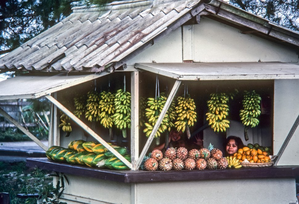 Free image of Woman selling fruit at a small stand in the jungle, Brazil