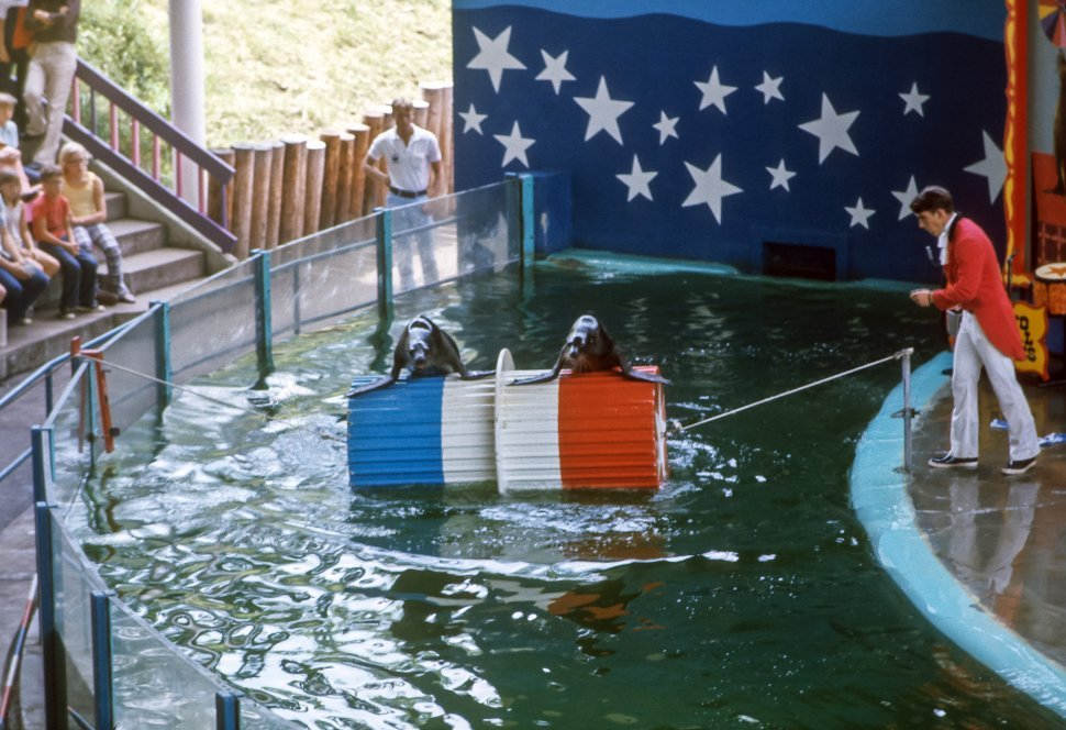 Free image of Seals performing for their trainer, Marineland, USA