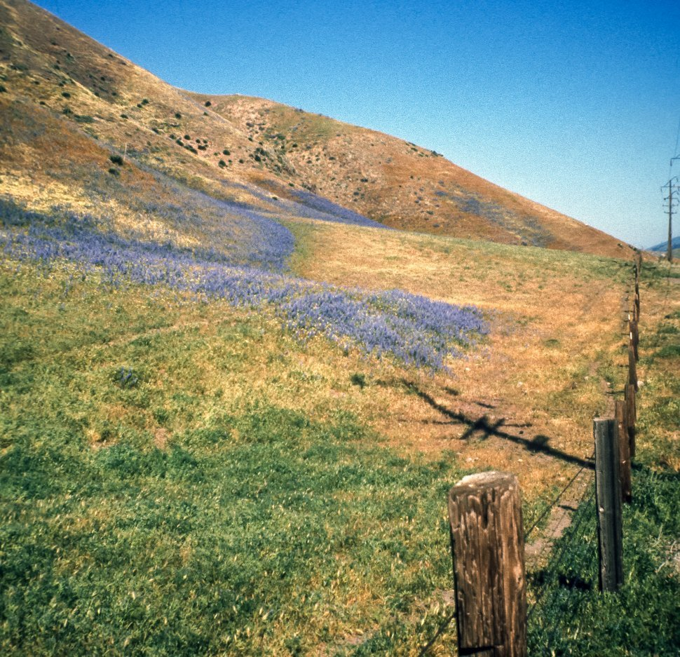 Free image of Wild flowers growing along the golden hillsides, California, USA