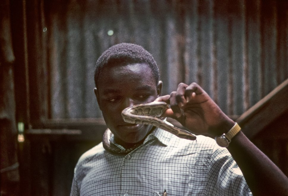 Free image of Boy posing holding a large snake, Africa