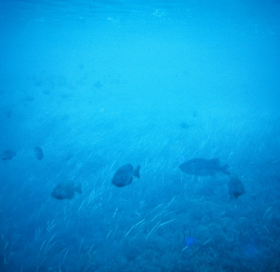 Free image of Image of fish swimming underwater, Hawaii, USA