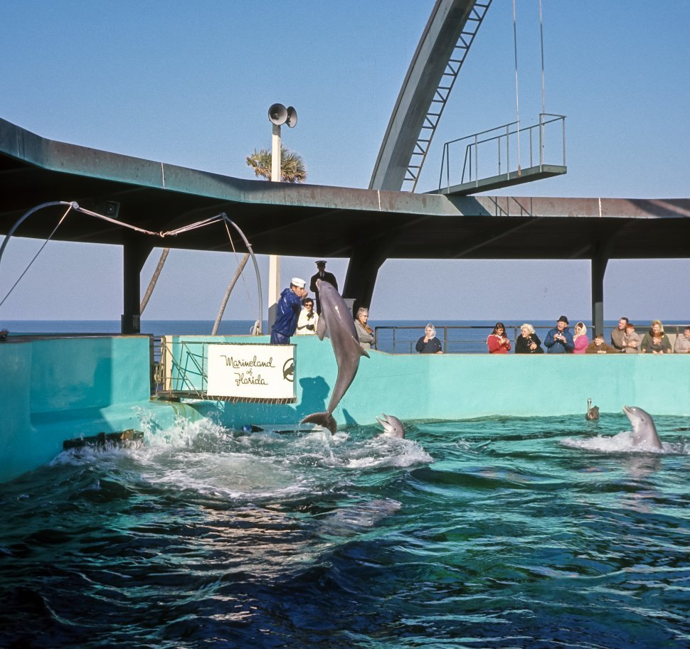 Free image of Dolphins performing with their trainer in a pool, Florida, USA