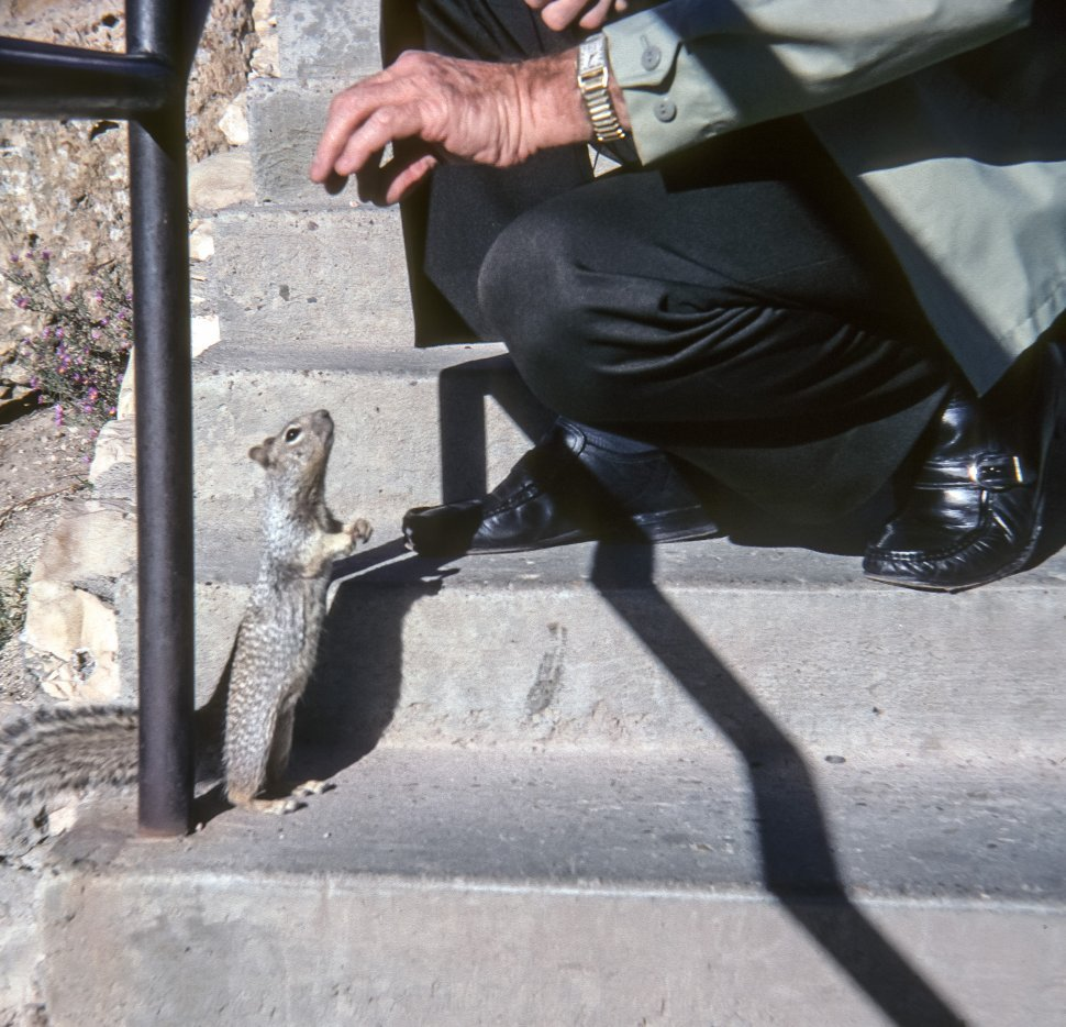 Free image of Man feeding a squirrel from his hand, USA