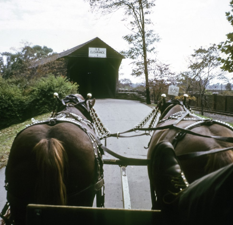 Free image of View of the back of horses pulling a carriage, USA
