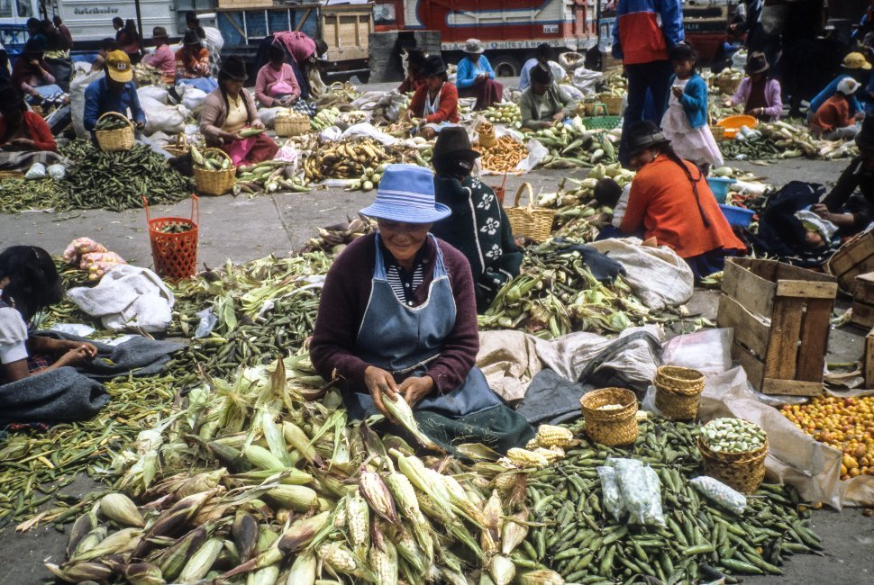 Free image of Ecuadorian woman selling her corn, amongst many other vendors, in a busy marketplace, Ecuador