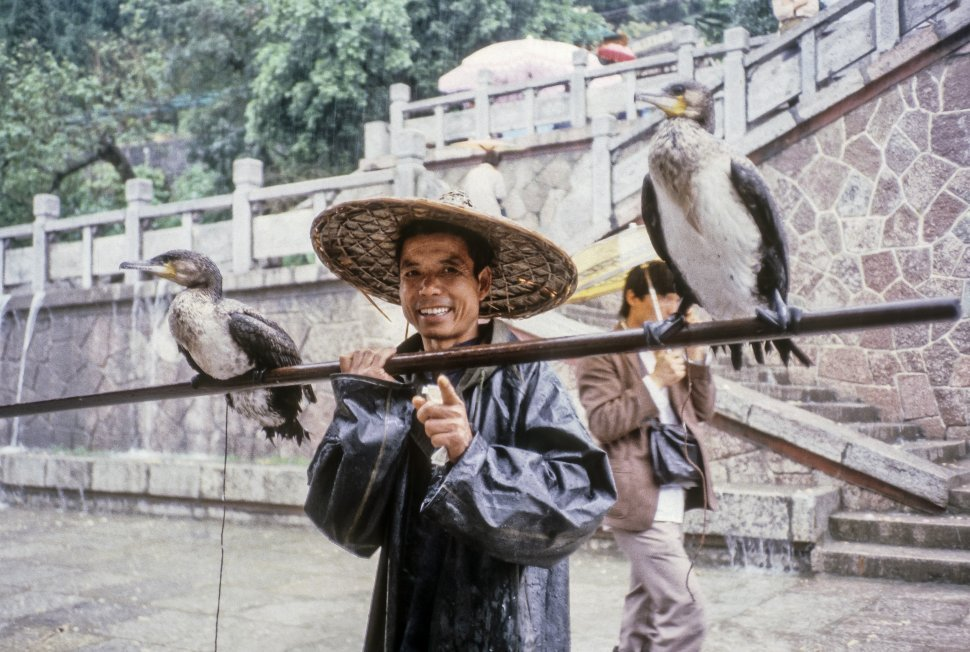 Free image of Cormorants and fisherman, famous for fishing on the shallow Lijiang River, China