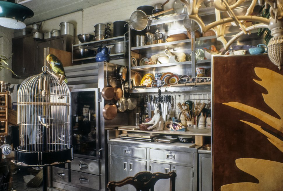 Free image of Parrot sitting on top of a cage in a kitchen.