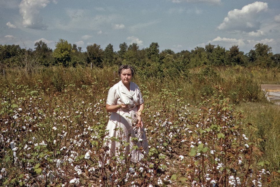Free image of Woman posing for a photograph in a cotton field, USA