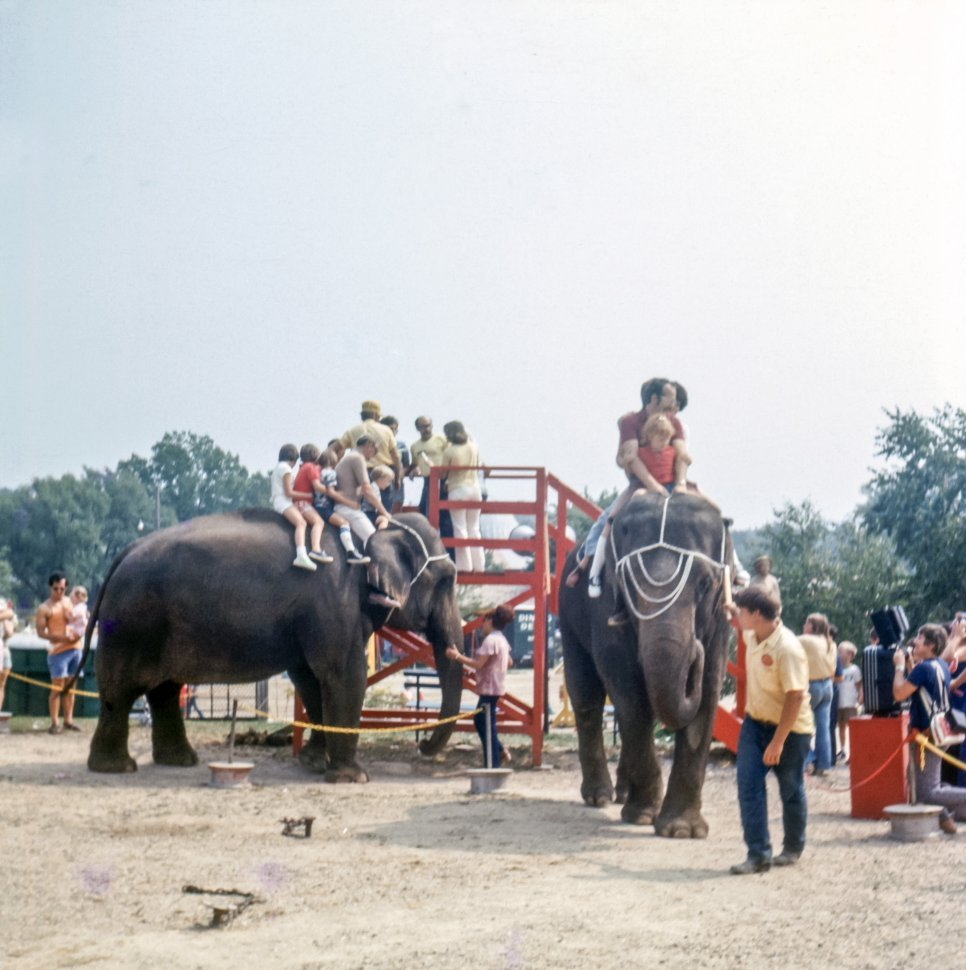 Free image of Tourists riding elephants in a circus park, USA