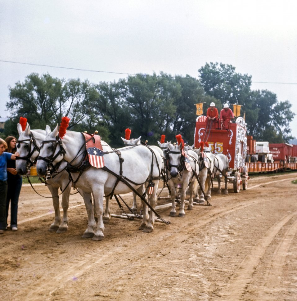 Free image of Clydesdale horses and wagon drivers in a parade at circus, USA
