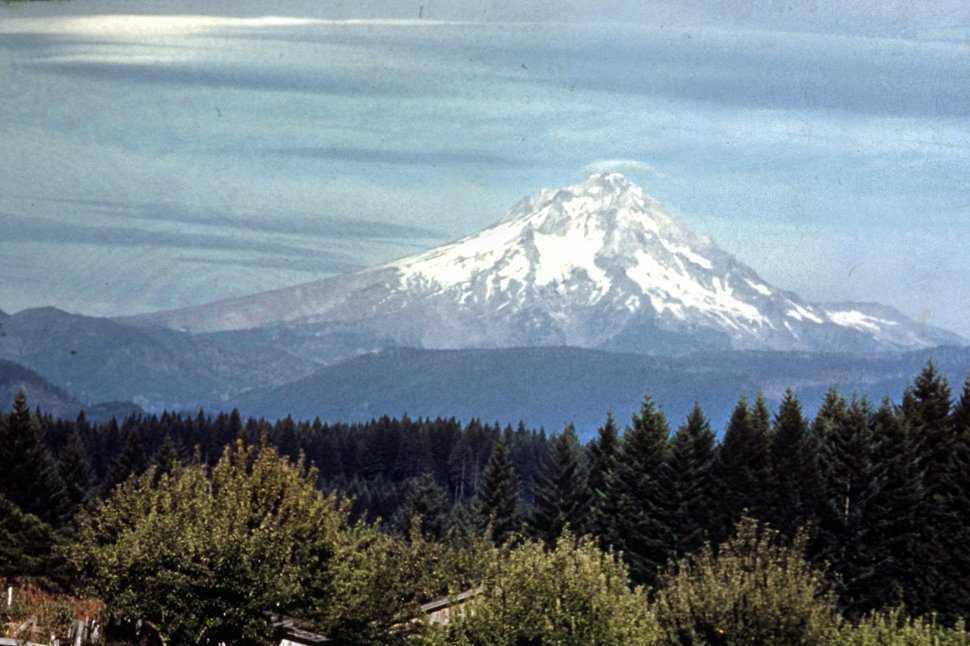 Free image of Snow covered Mt. Hood rises above forest floor, Oregon, USA