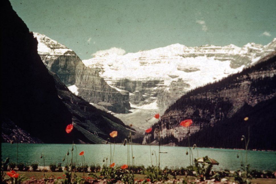 Free image of Flowers and view of Lake Louise, Banff National Park, Canada