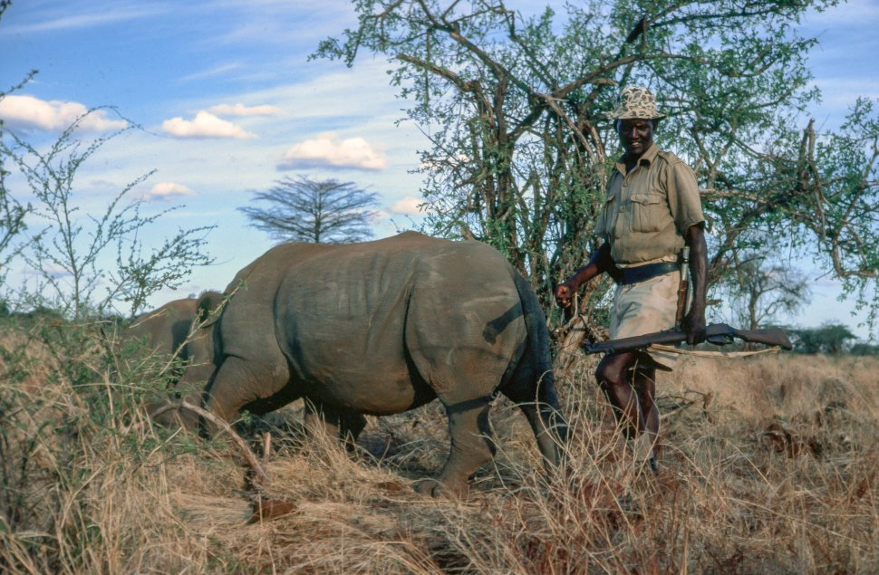 Free image of Rhino caretaker with Rhinoceros
