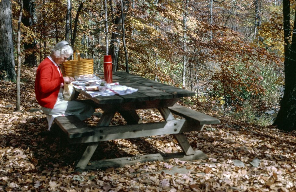 Free image of Woman sitting at the dining table and eating in the forest