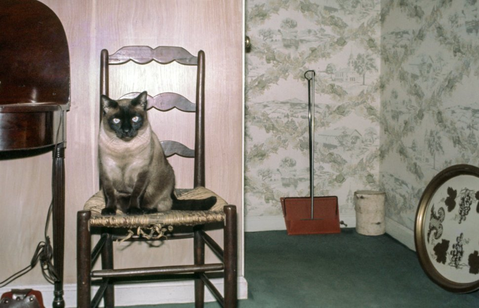 Free image of One Cat on Chair Inside a house