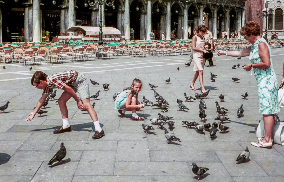 Free image of Children and people feeding pigeons