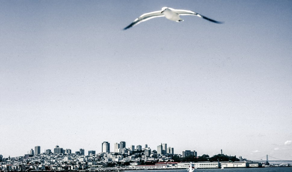 Free image of Seagull in flight over san francisco