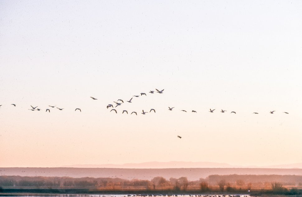 Free image of Birds in flight over lake