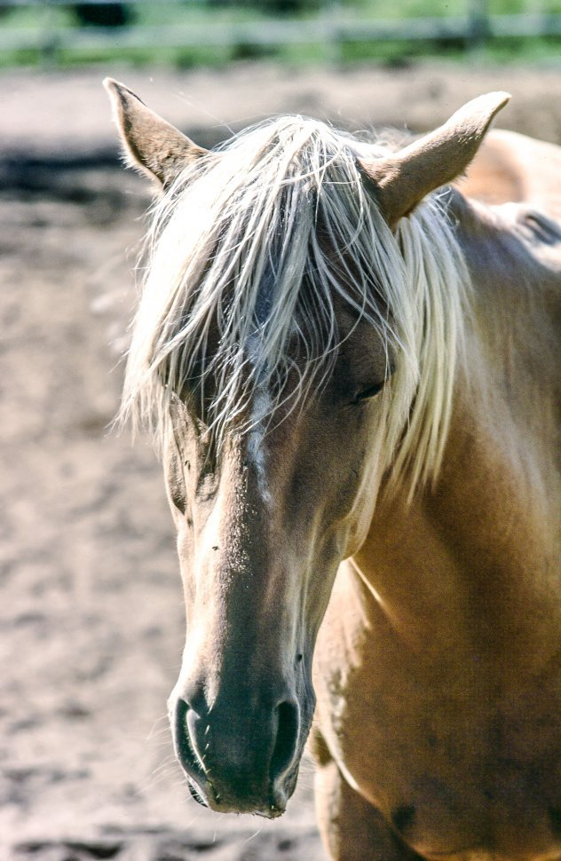 Free image of Mare or Female Horse