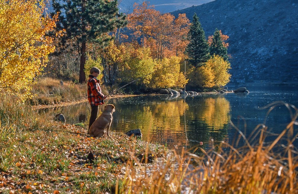 Free image of Boy fishing with his dog in the lake during autumn season