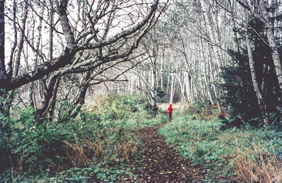 Free image of Unidentified Person walking on hiking trail in the forest