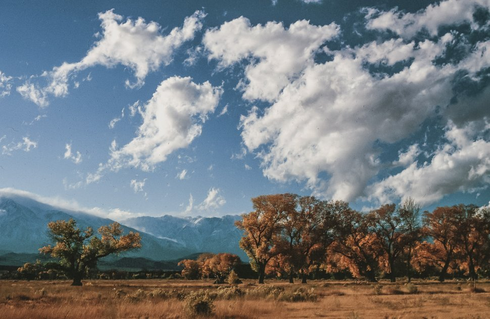 Free image of Cottonwood trees in autumn at Inyo National Forest in Bishop, California