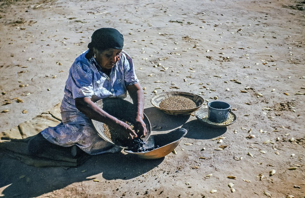 Free image of Old Native American Woman uses traditional basket to winnow and clean corn